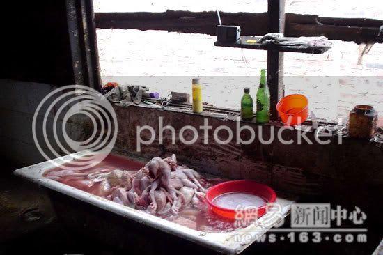 No wonder We don't like Chicken Image011