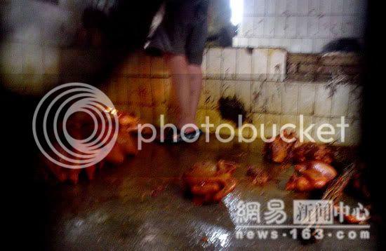 No wonder We don't like Chicken Image012