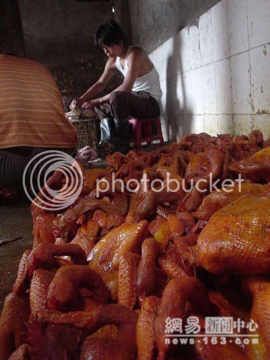 No wonder We don't like Chicken Image013