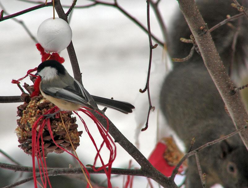 À la distasio, pour les oiseaux!! 26novembre2007015