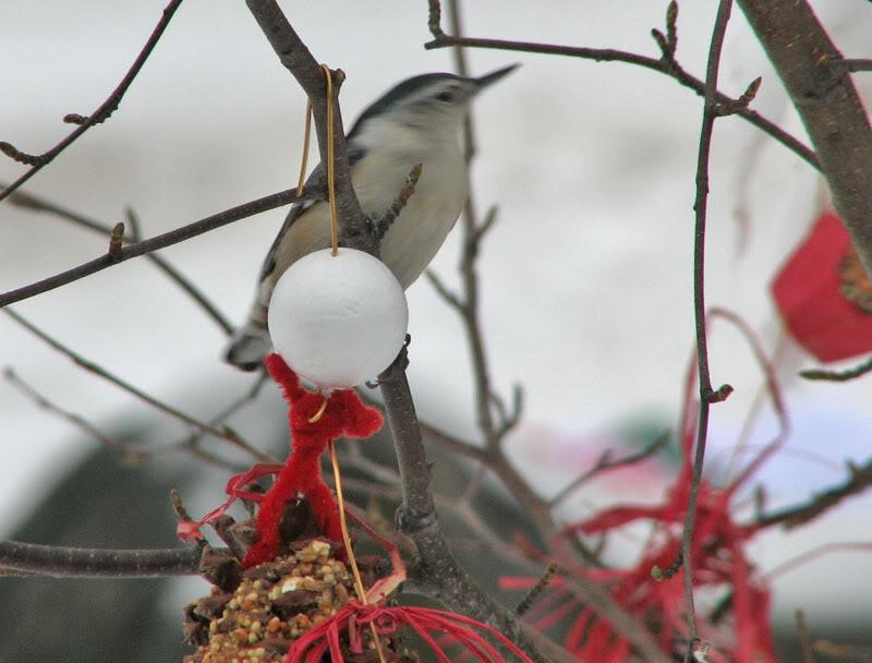 À la distasio, pour les oiseaux!! 26novembre2007030
