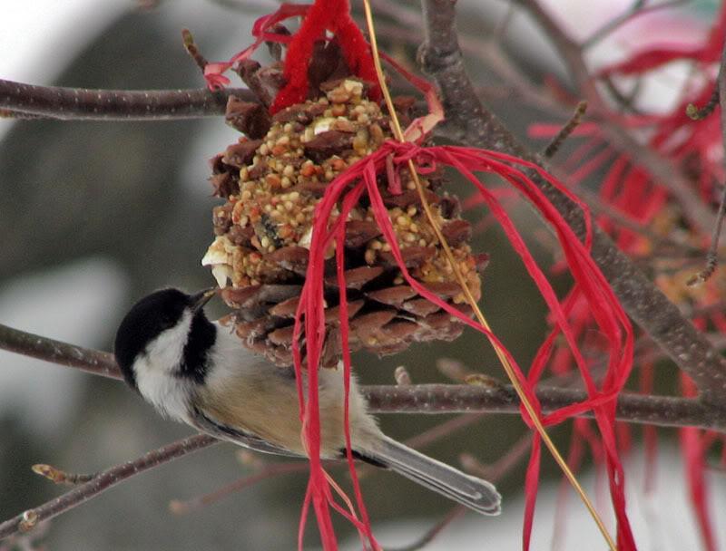 À la distasio, pour les oiseaux!! 26novembre2007043
