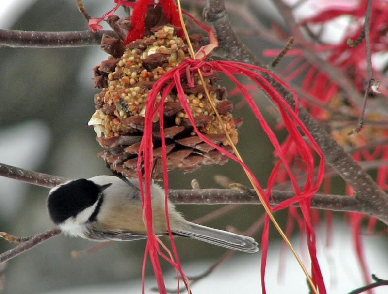 À la distasio, pour les oiseaux!! 26novembre2007044
