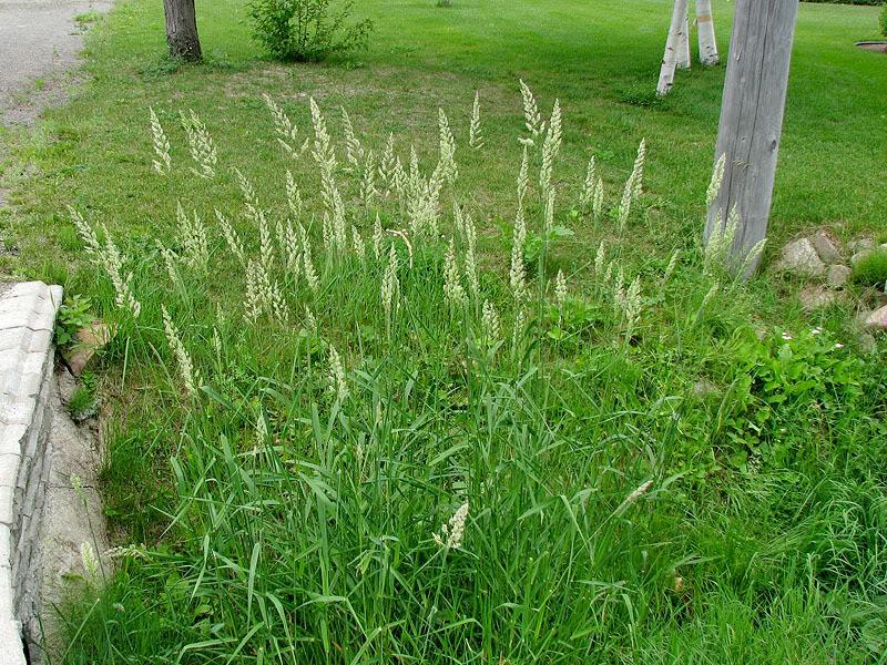 Dites-moi, de quelle plante s'agit-il? 16juin2008110