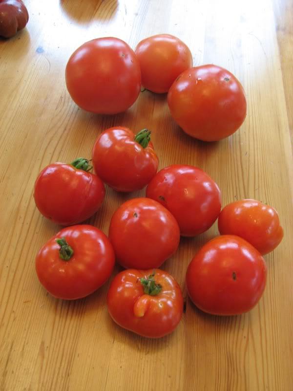 aide: identifier mes tomates. nenor, Lulu, fleur de peau? 26aot2008098