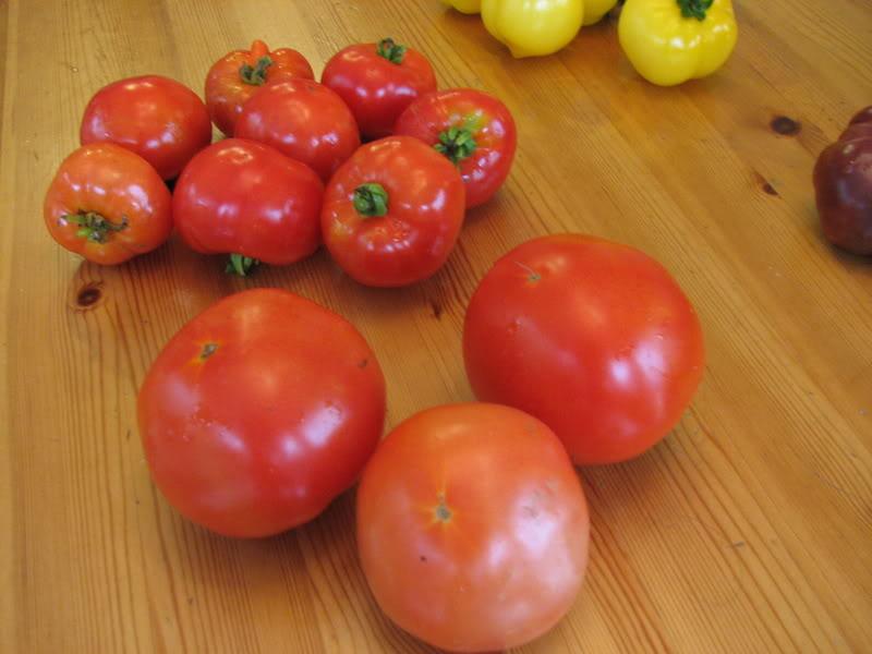 aide: identifier mes tomates. nenor, Lulu, fleur de peau? 26aot2008099