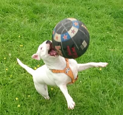 lexi now 11 month playing with her first ball that she hasnt destroyed (yet) Screenshot_2014-06-23-14-16-06_zps4b5dda73