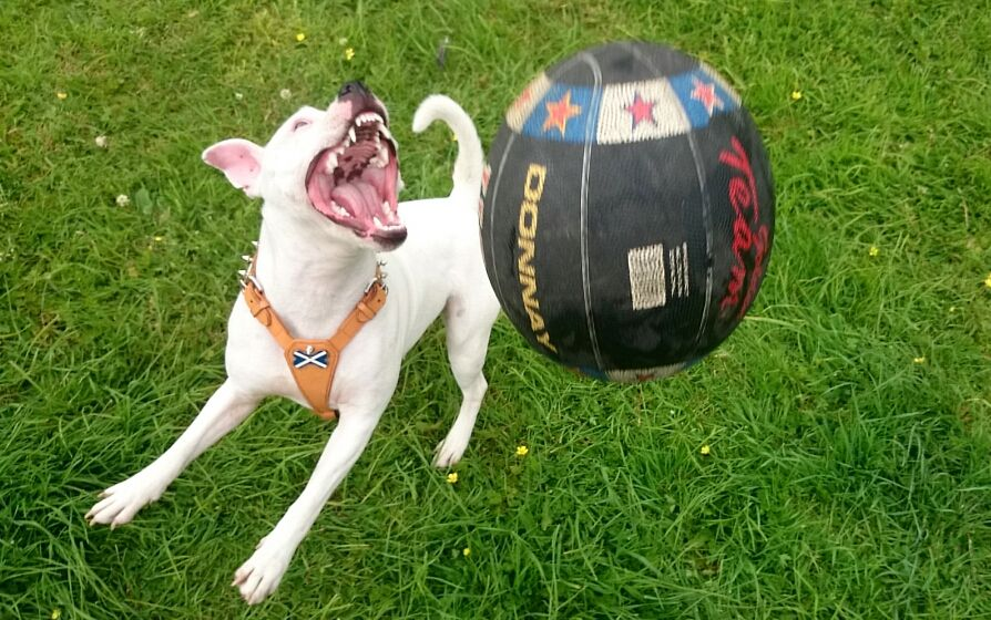 lexi now 11 month playing with her first ball that she hasnt destroyed (yet) Screenshot_2014-06-23-14-16-43_zps58532eff