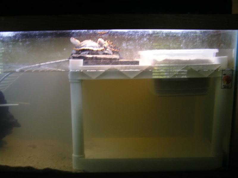 Photos des aqua avec bac de ponte - Page 2 Ornatetank0002