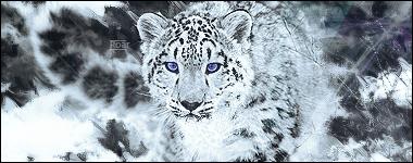 My portfolio :) Roar