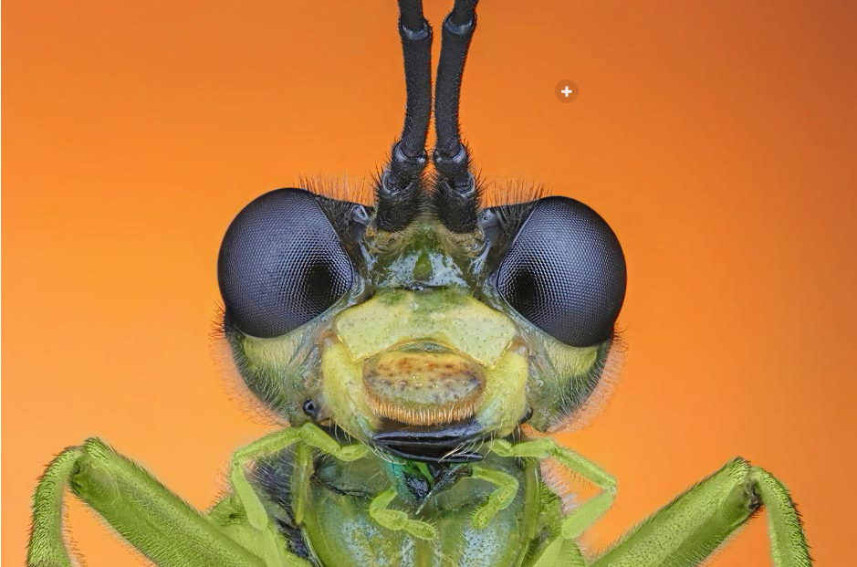 There is no greater artist than the Creator  ExtremeMacroPhotography2014-03-2118-07-09_zps9f1c1040