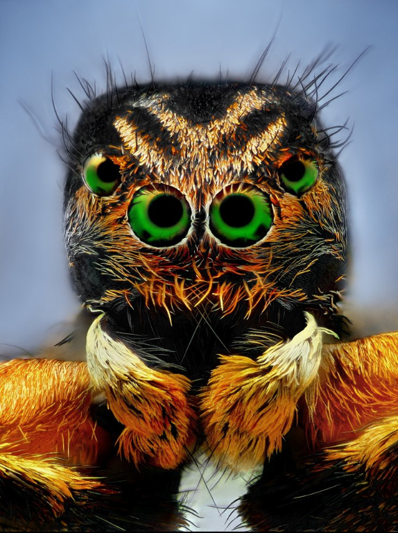 There is no greater artist than the Creator  MummyAelurillusv-insignitusdeadjumpingspider-FlickrndashCompartilhamentodefotos2014-03-2118-12-09_zps4b8e1007