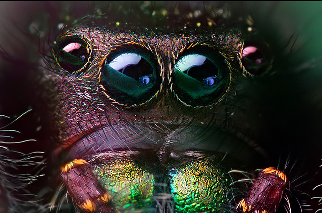 There is no greater artist than the Creator  Phidippusaudaxat7181FullFrameFlickrndashCompartilhamentodefotos_zpse46f4edd