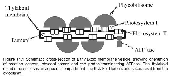 Cyanobacteria, amazing evidence of design TheCyanobacteria-MolecularBiologyGenomicsandEvolution-GoogleLivros2014-03-0112-41-09_zps1f128119