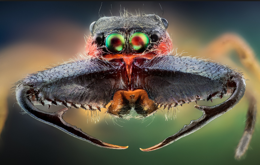 There is no greater artist than the Creator  Macrophotography-PesquisaGoogle2014-03-2118-04-46_zpsbc7d995f