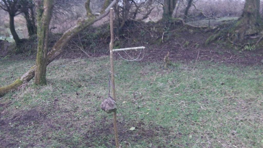 Ojibwa bird trap first attempt 103_0542