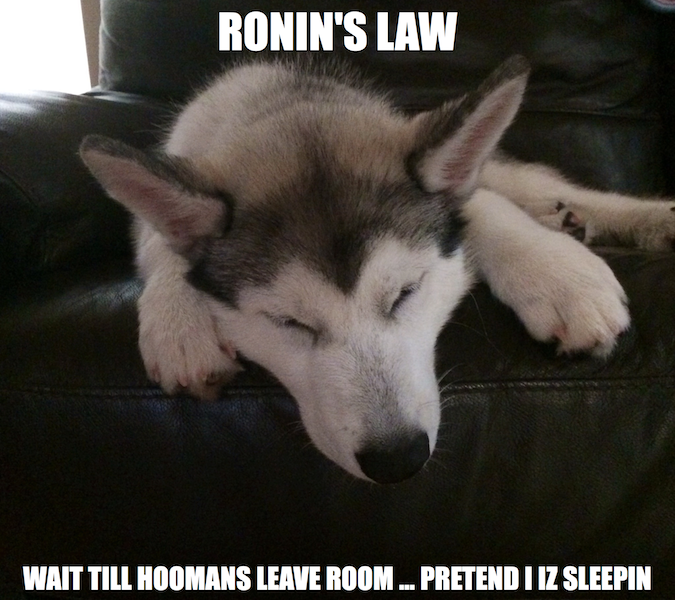 Meet Ronin! Sleepinmeme_zps7739cd97