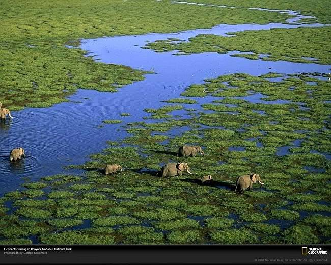 Post your favorite pics friends (any pics ). Aerial-view-elephants-kenya-981243-