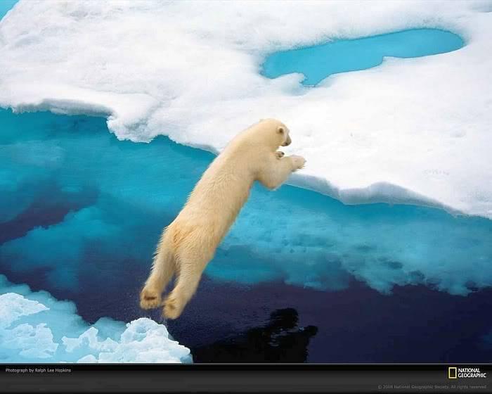 Post your favorite pics friends (any pics ). Blue-polar-bear-hopkins-1052295-xl
