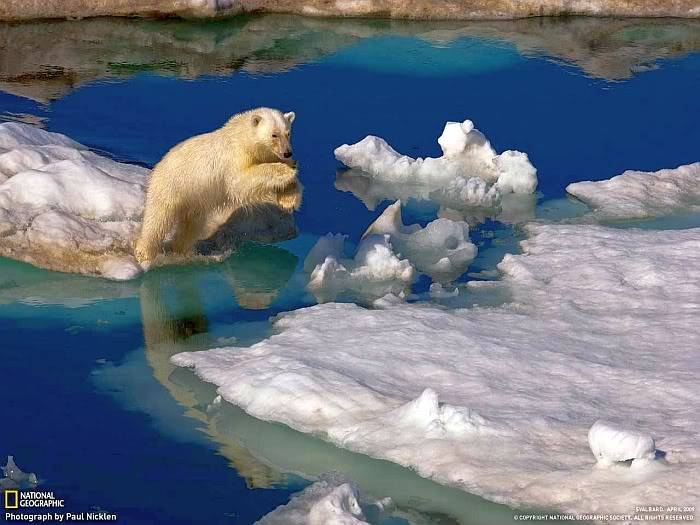 Post your favorite pics friends (any pics ). Polarbear