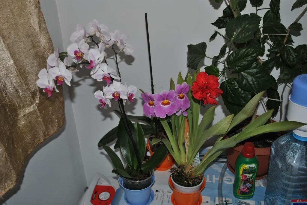 florile din apartament/gradina - Pagina 7 F1