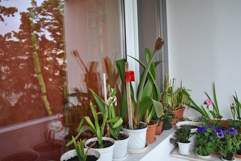 florile din apartament/gradina - Pagina 7 F10