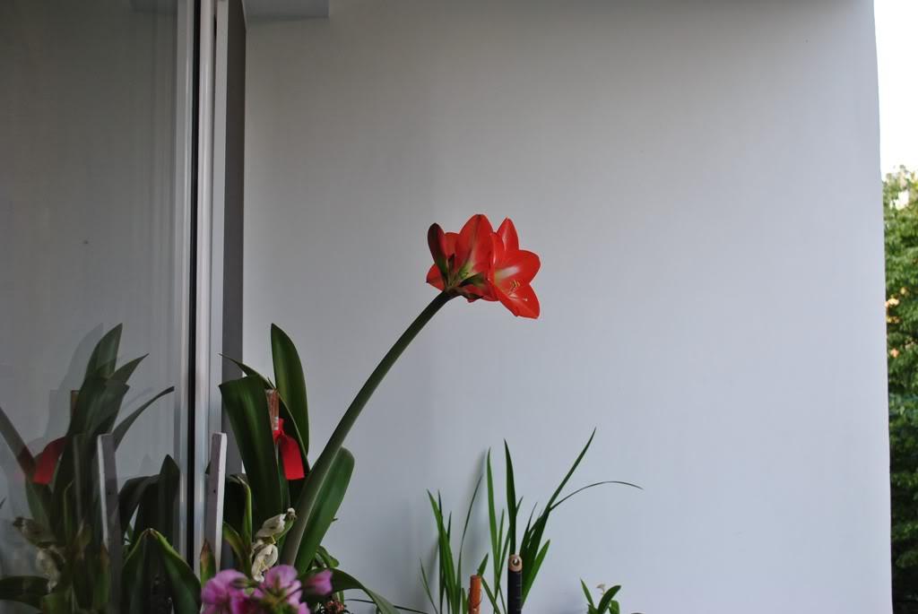 florile din apartament/gradina - Pagina 8 F11-1