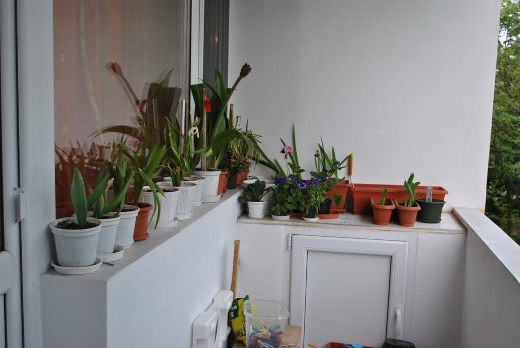 florile din apartament/gradina - Pagina 7 F11