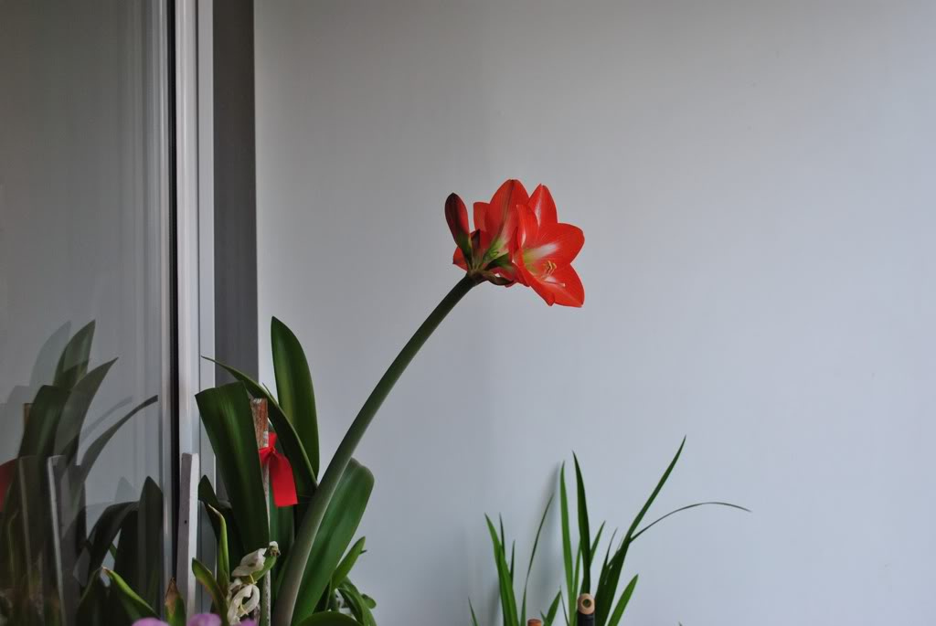 florile din apartament/gradina - Pagina 8 F12-1