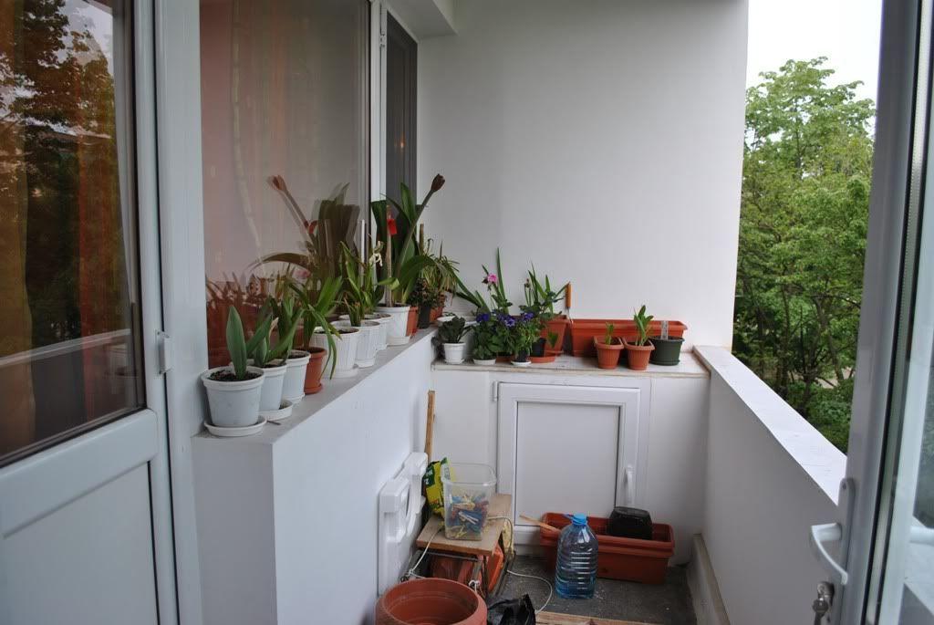 florile din apartament/gradina - Pagina 7 F12