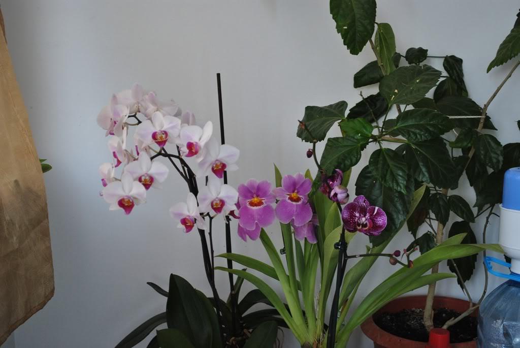 florile din apartament/gradina - Pagina 8 F13