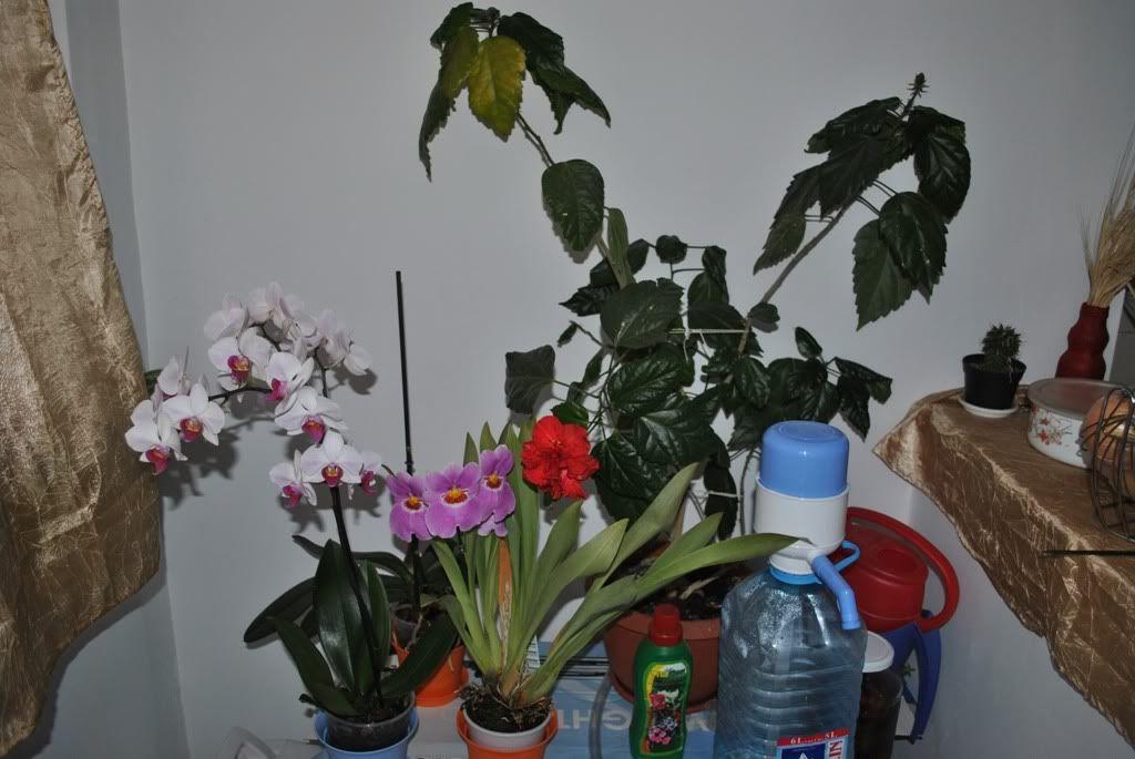 florile din apartament/gradina - Pagina 7 F2
