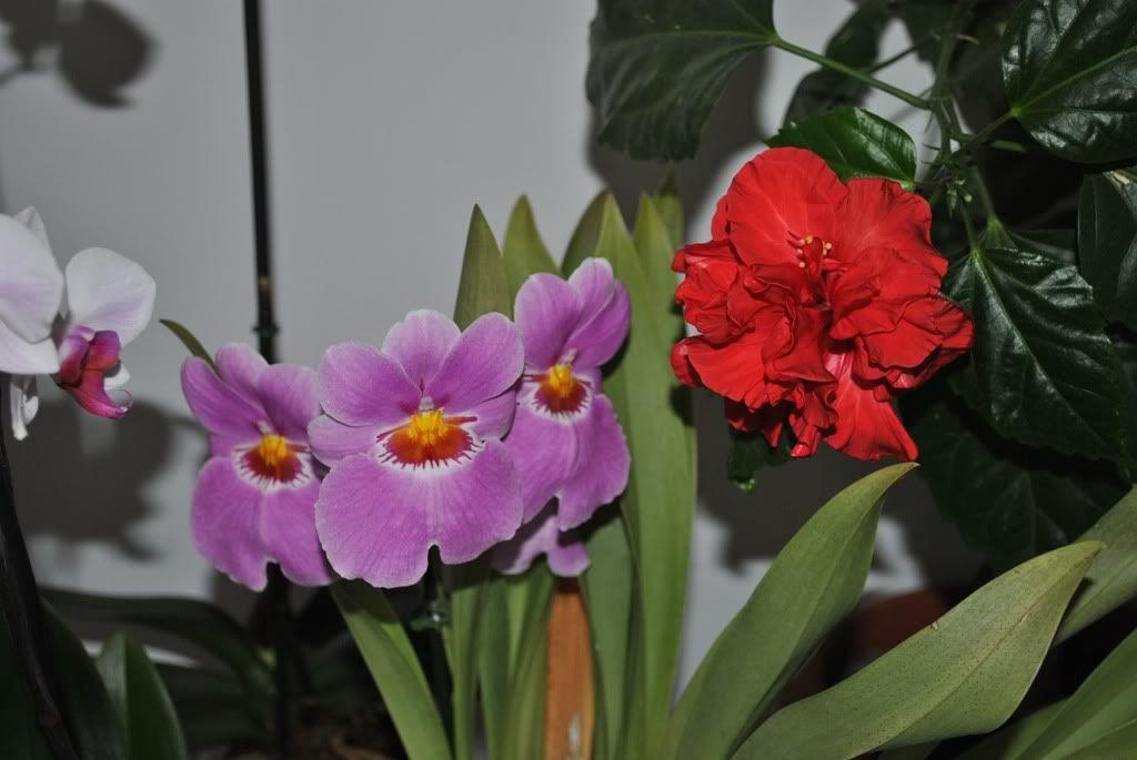 florile din apartament/gradina - Pagina 7 F3
