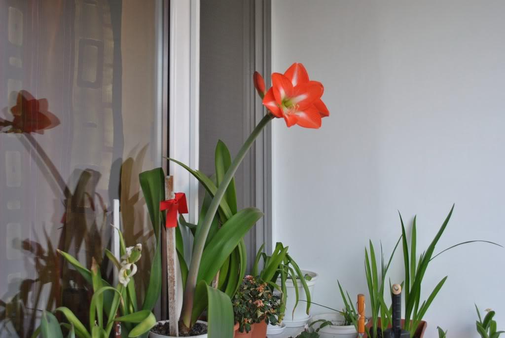 florile din apartament/gradina - Pagina 8 F4-1