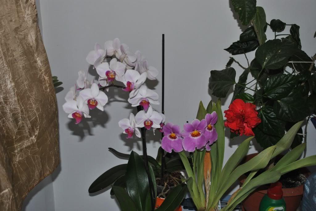 florile din apartament/gradina - Pagina 7 F4