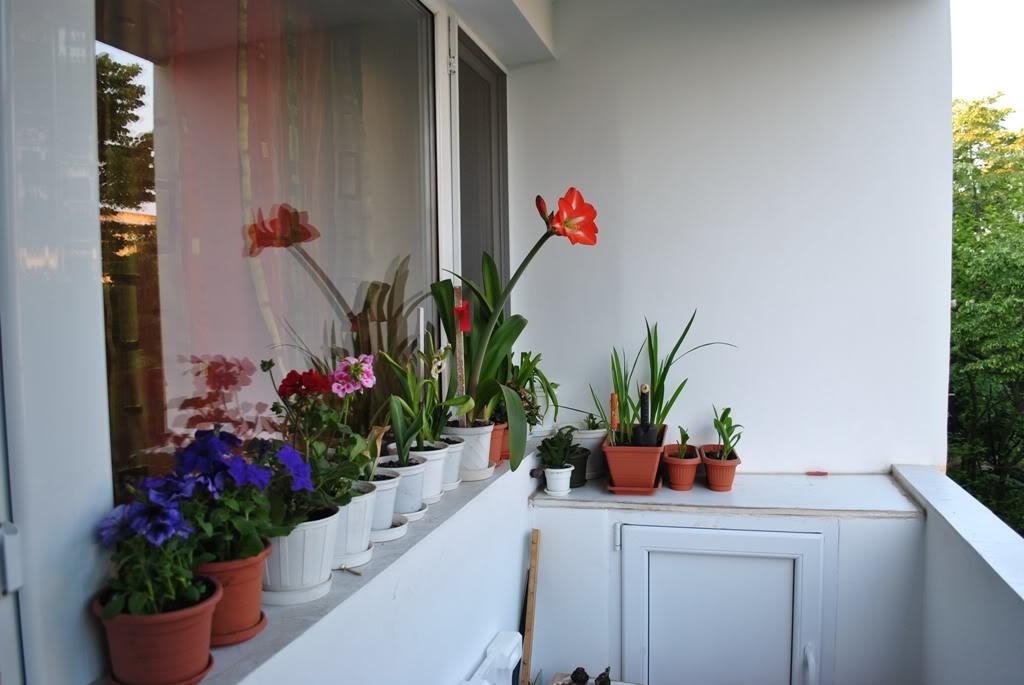 florile din apartament/gradina - Pagina 8 F5-1