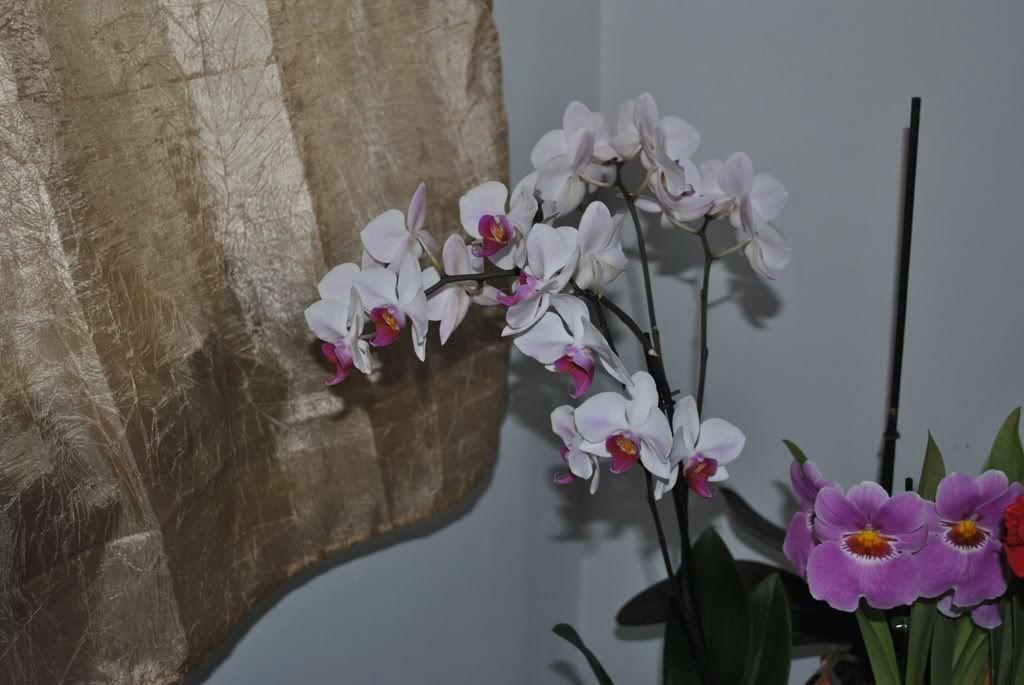 florile din apartament/gradina - Pagina 7 F5