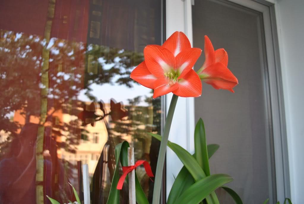 florile din apartament/gradina - Pagina 8 F6-1