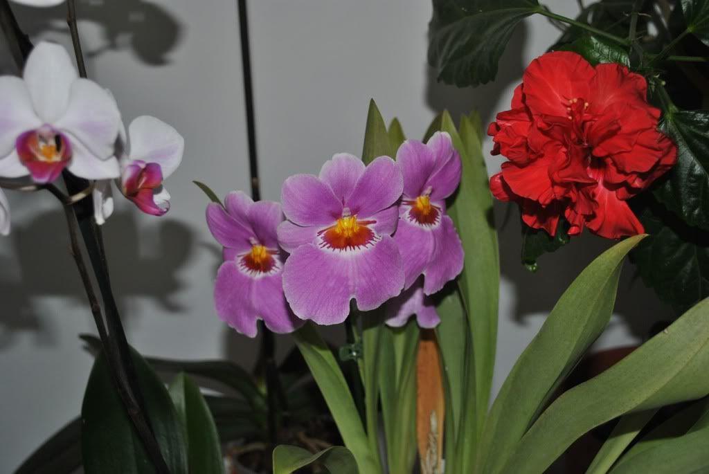 florile din apartament/gradina - Pagina 7 F6