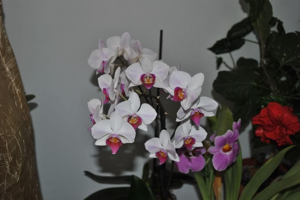 florile din apartament/gradina - Pagina 7 F7
