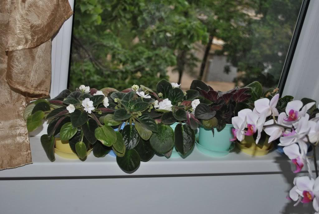 florile din apartament/gradina - Pagina 7 F8