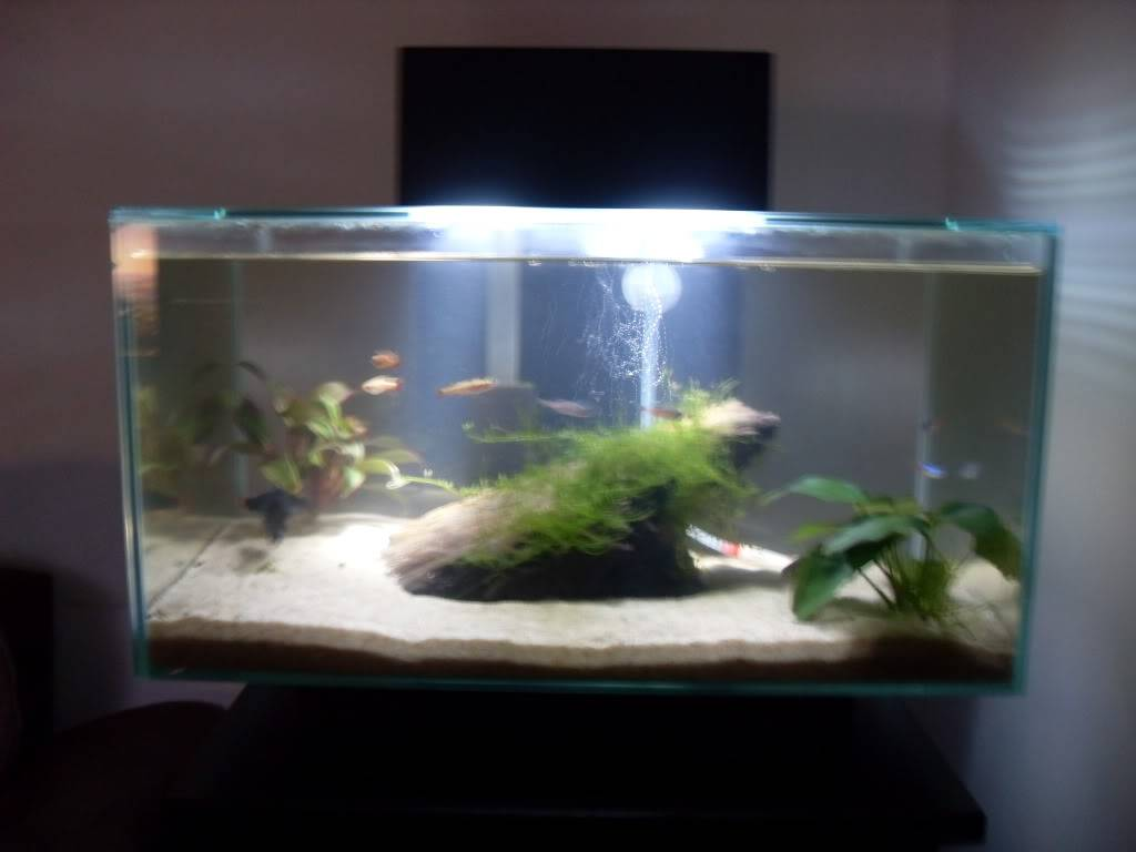 Fluval Edge MR16 LED Upgrade SDC11289