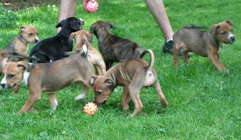Cross breed pups (not large breed) 29 days old in Kent 09bbb648