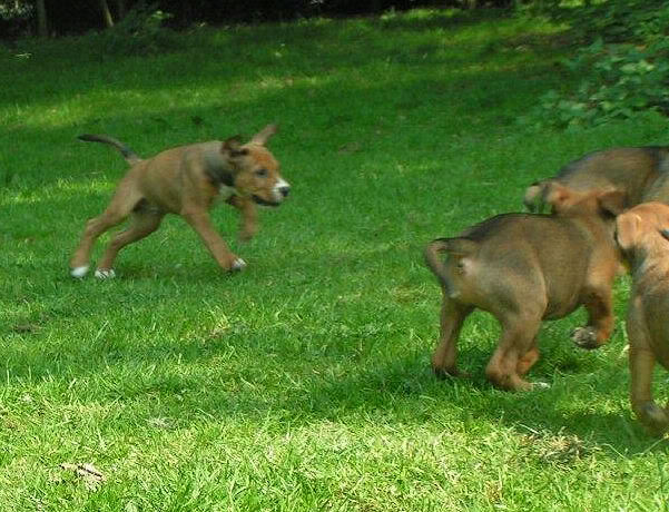 Cross breed pups (not large breed) 29 days old in Kent 1d1c077e