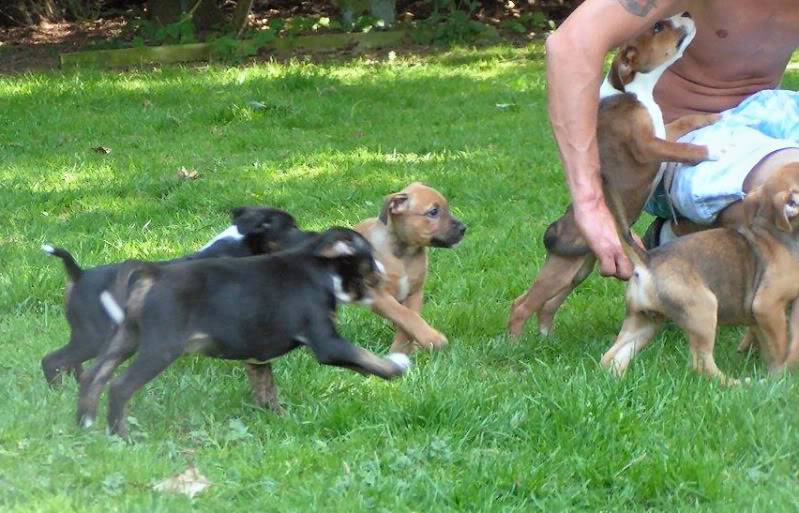 Cross breed pups (not large breed) 29 days old in Kent 393042e8