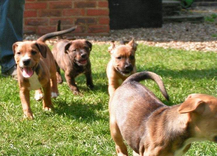Cross breed pups (not large breed) 29 days old in Kent 3decb79c