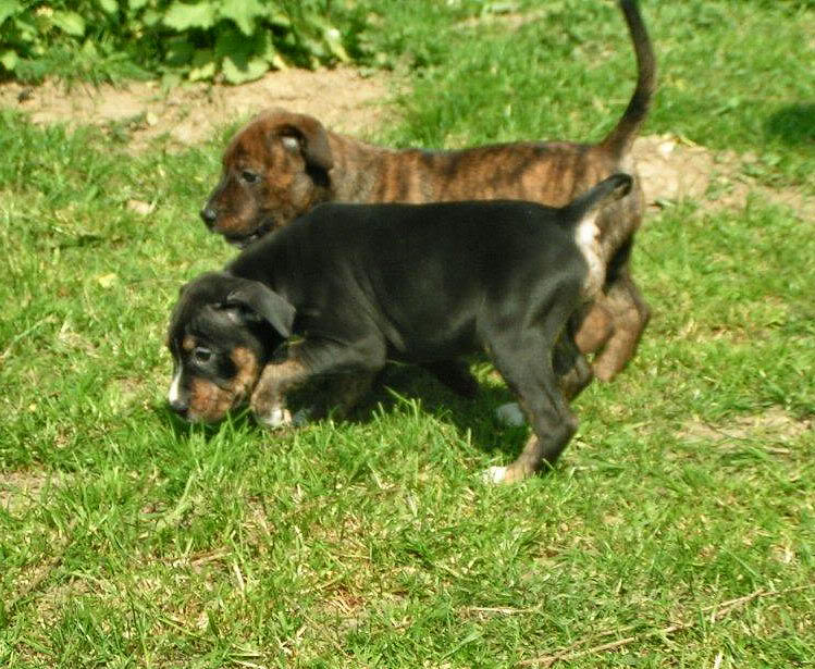 Cross breed pups (not large breed) 29 days old in Kent 4b39504b