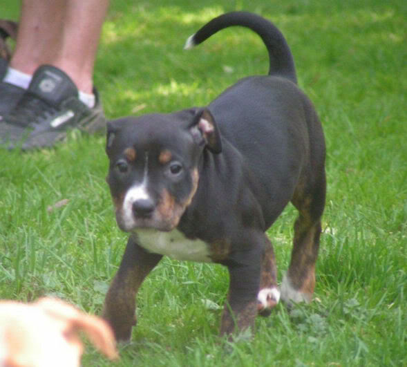 Cross breed pups (not large breed) 29 days old in Kent 5fe0eb86