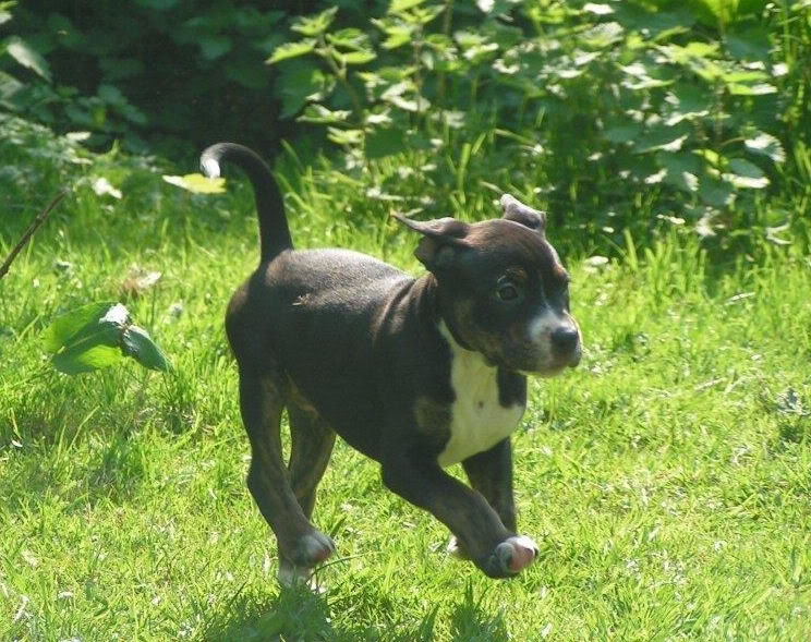 Cross breed pups (not large breed) 29 days old in Kent 60bda713