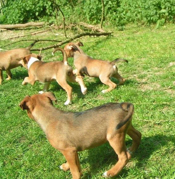 Cross breed pups (not large breed) 29 days old in Kent 6d7c0ab0